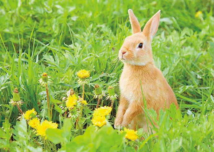 4月【自然・観察】かんさつ・はっけん うさぎの ひみつ