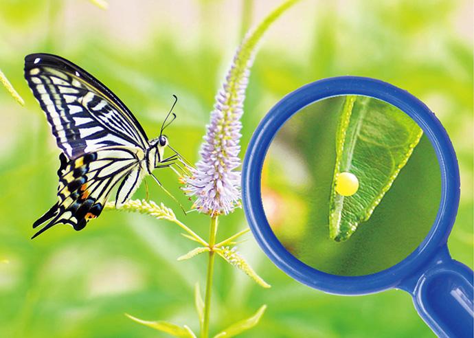 5月【自然・観察】だれの たまごかな?